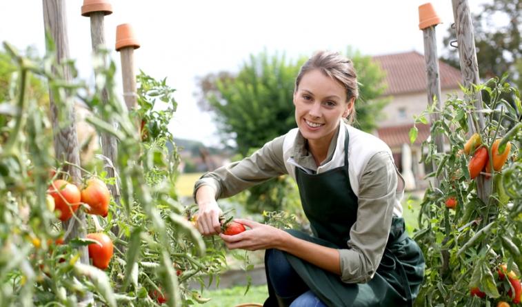"""""""Organic Farming Will Improve in the Blockchain Age"""" – Fieldcoin CEO"""
