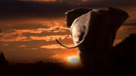 ConsenSys and WWF Create Impact Investment Platform